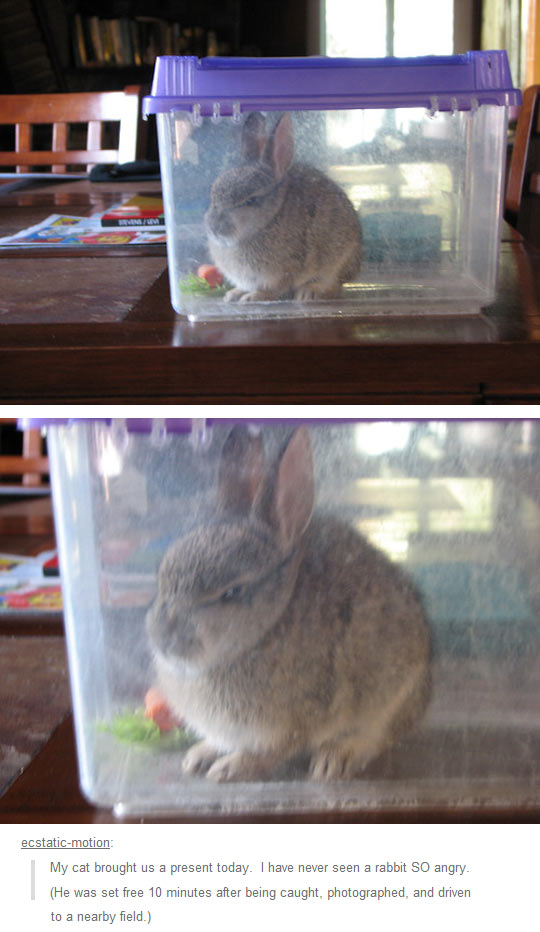 funny-rabbit-trapped-carrot-mad