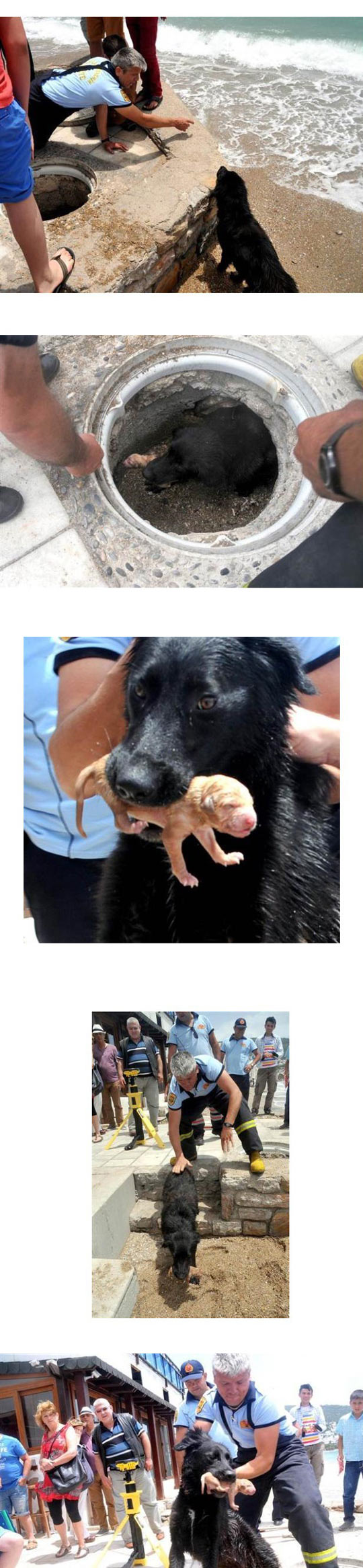 funny-rescue-team-sea-dog-mother-puppies