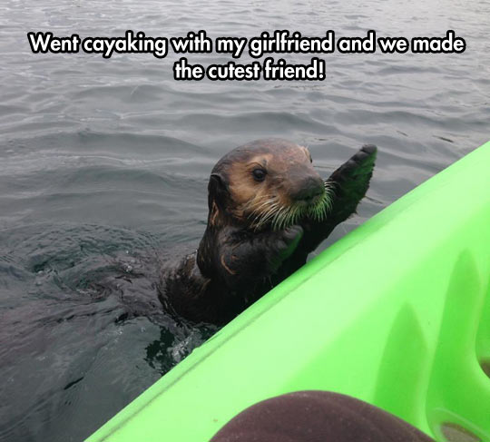 The Cutest Sea Friend