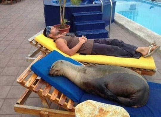 This Sunbed Is Seal Approved