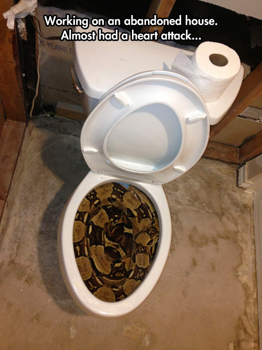 funny-snake-toilet-abandoned-house-sleeping