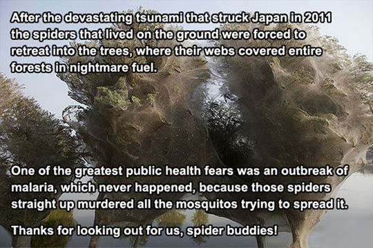 Thank You, Spiders