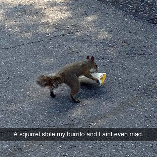Burrito Stealing Squirrel