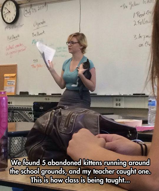 funny-teacher-class-kitty-college