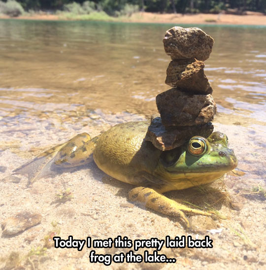 funny-toad-water-rock-above