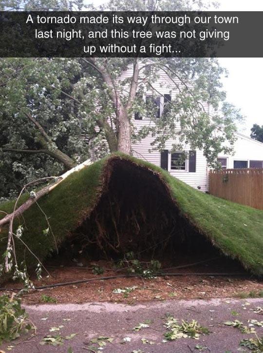 funny-tornado-tree-house-fallen-root