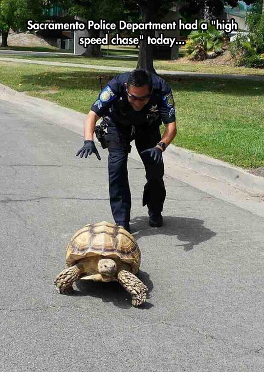 funny-tortoise-street-pursuit-police