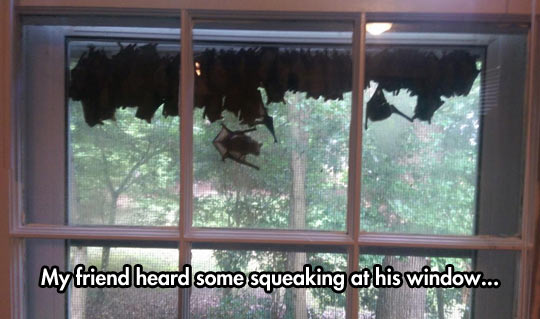 funny-windows-sound-bats-hanging