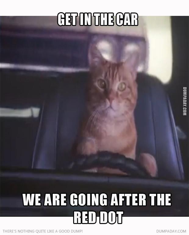 get-in-car-red-dot-cat
