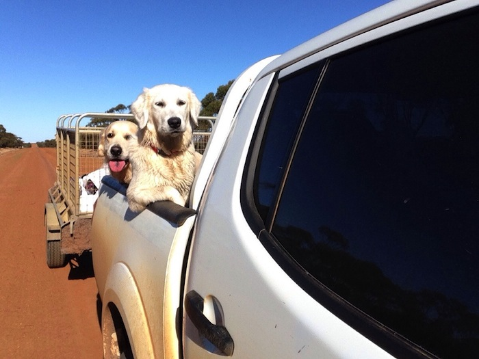 my dog decided to sit like a human on my ute today