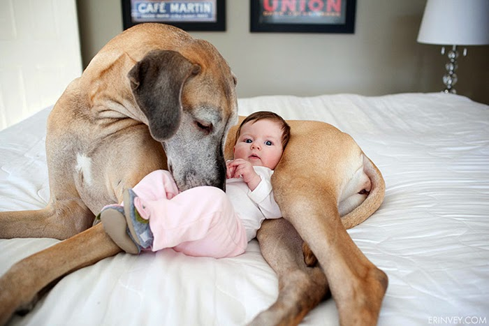 22 little kids and their big dogs - Little Kids Pictures
