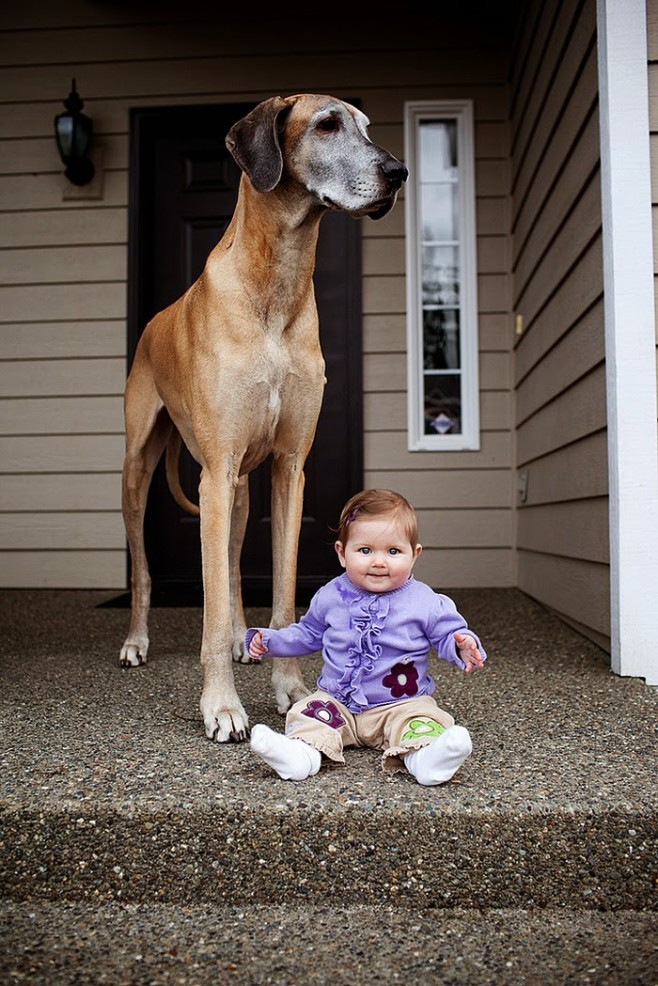 Shy People: 22 Little Kids And Their Big Dogs