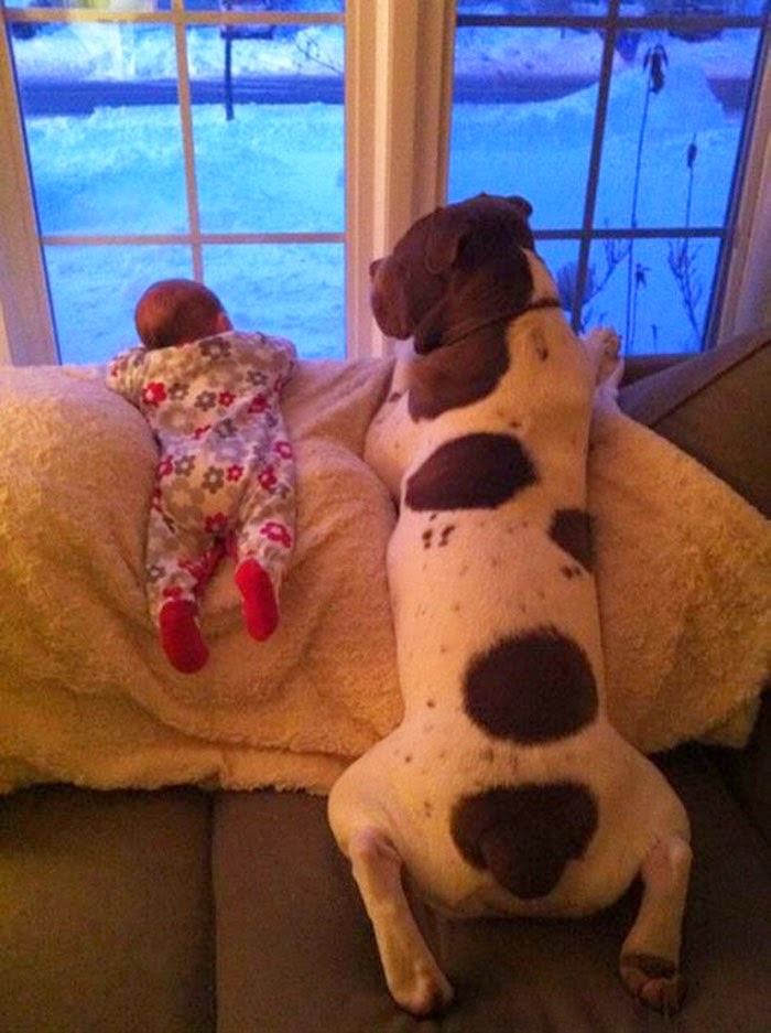 22 Little Kids And Their Big Dogs..!