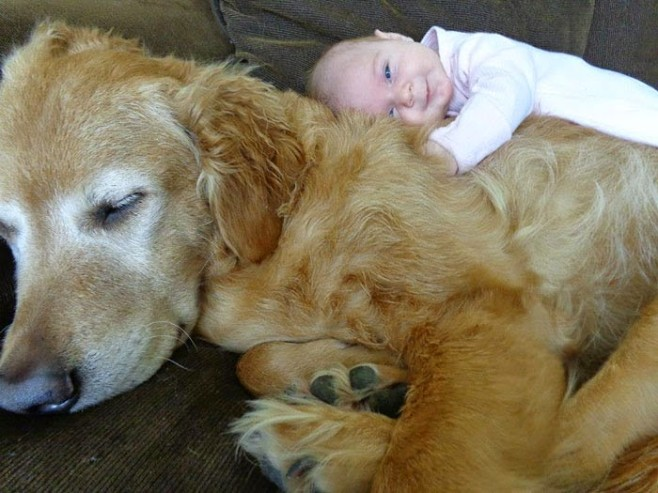 22 Little Kids And Their Big Dogs,