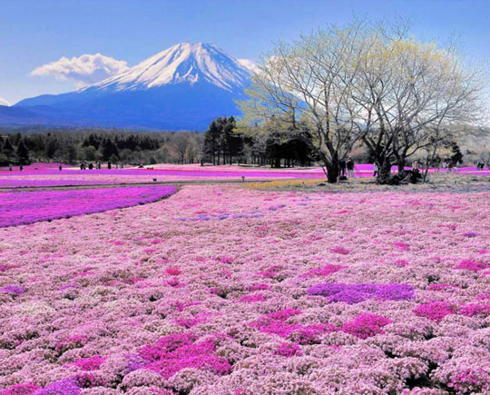cool-Japan-flowers-mountain-trees