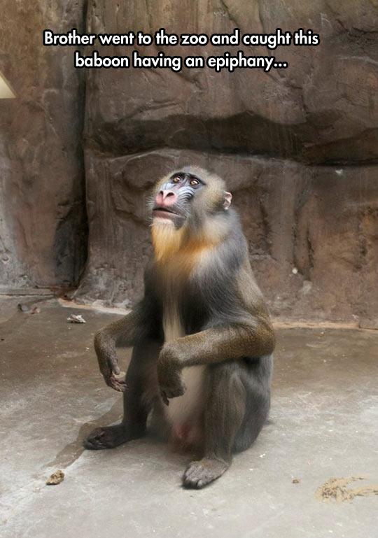 Rafiki Just Realized Simba