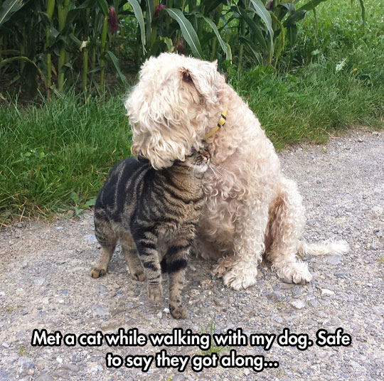 cool-cat-dog-friends-street