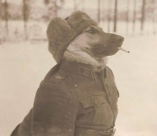 cool-dog-sergeant-costume-WWII