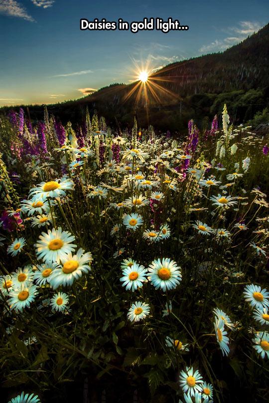 cool-flower-sun-mountain-daisies