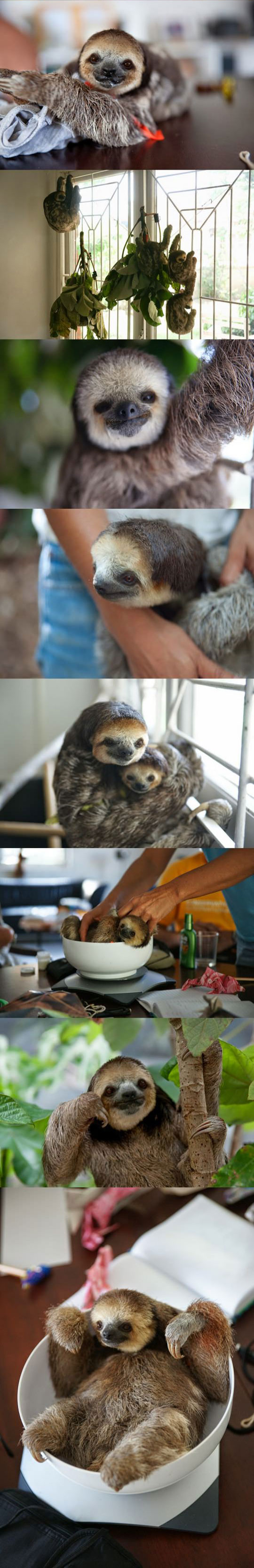cool-house-sloths-happy