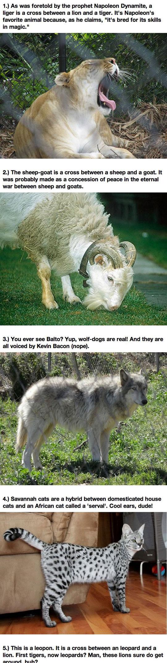 12 Real Animal Hybrids