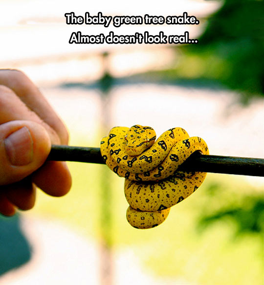 Baby Green Tree Snake