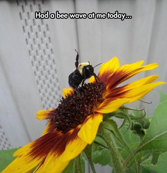 Very Friendly Bee