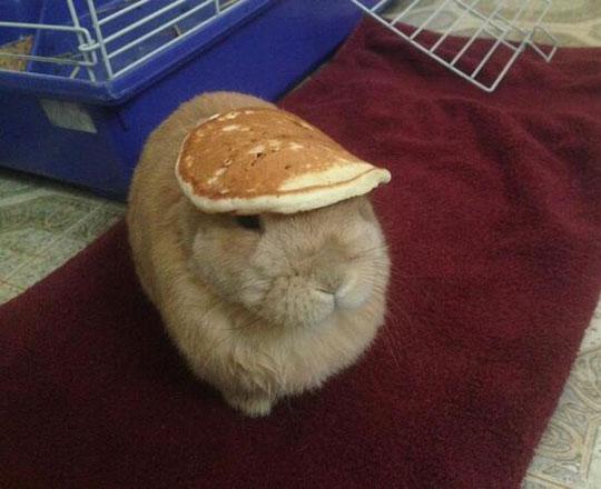 cute-bunny-pancake-head-hat