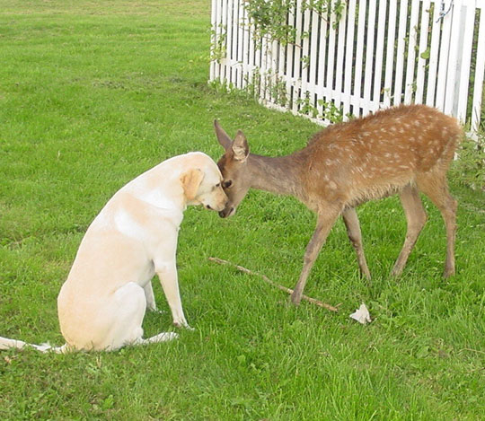 A Dog And A Deer