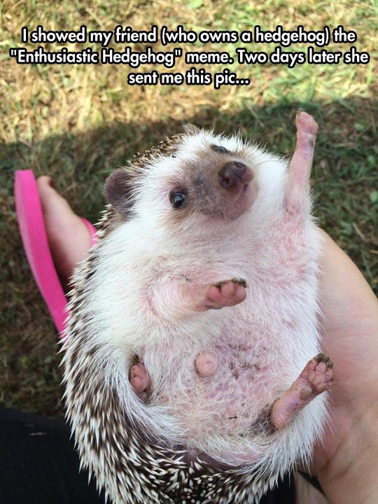 More Enthusiastic Hedgehog