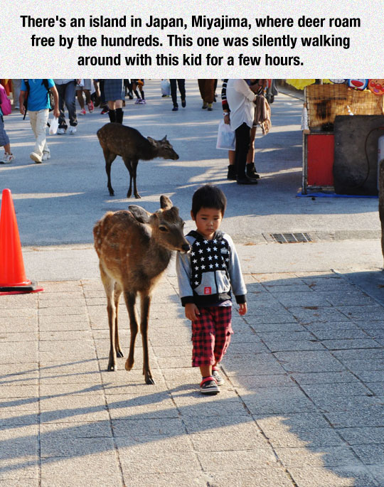 cute-kid-walking-deer-street