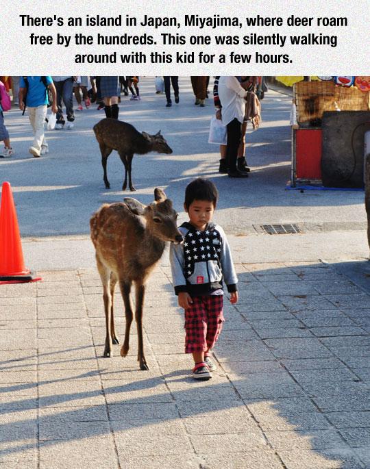 Free-Roaming Wild Animals