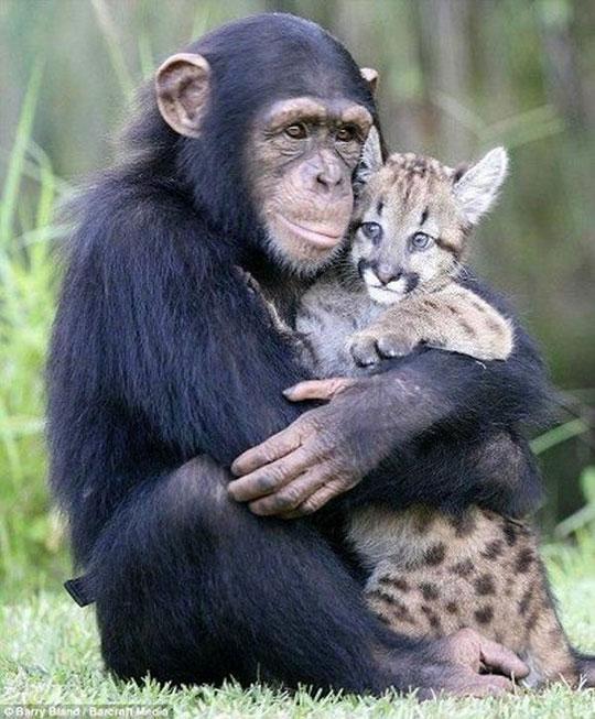 That Monkey Looks Truly Happy