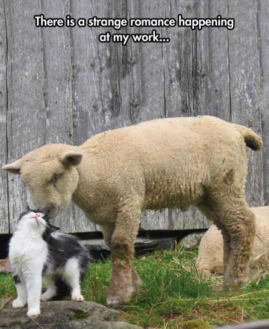 cute-sheep-cat-kiss-love