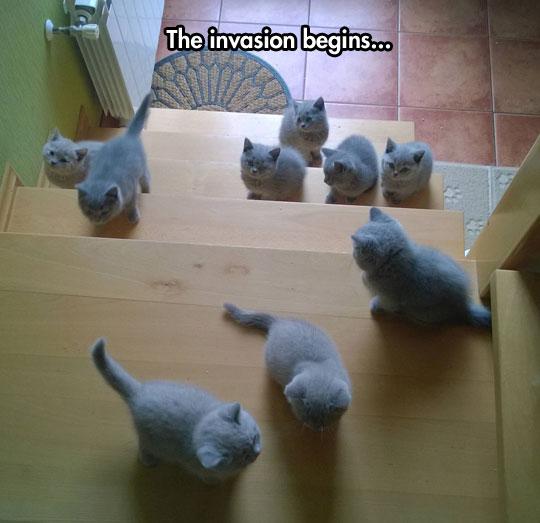 cute-stairs-kitties-cute