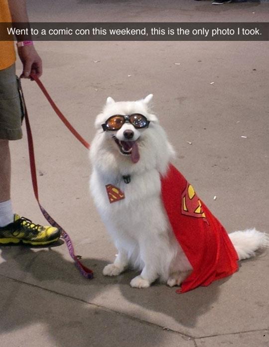A Good Old Superdog Costume