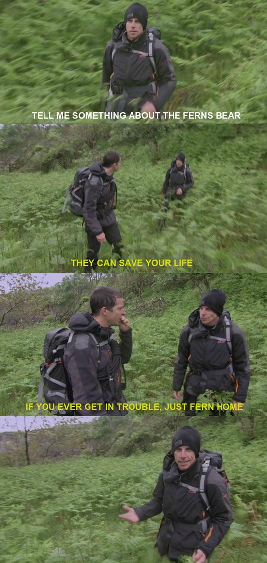 Bear Grylls On Ferns