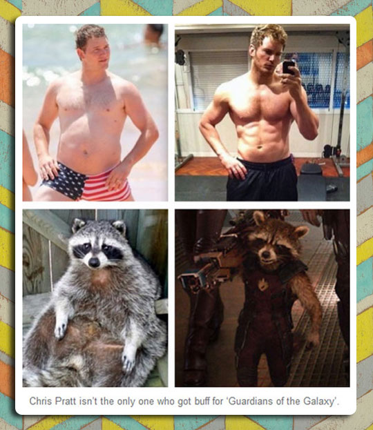 funny-Chris-Pratt-Rocket-Raccoon