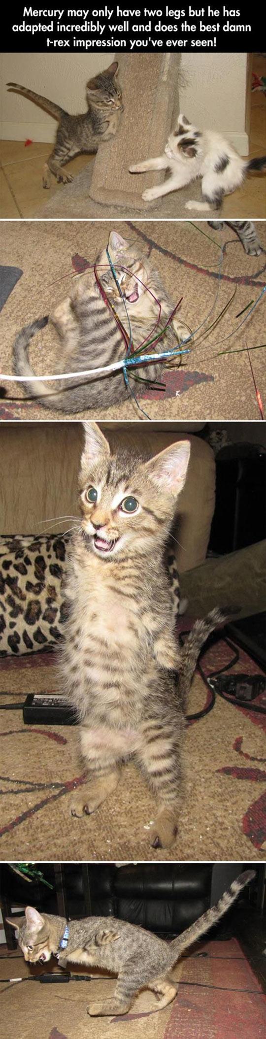 The T-Rex Cat