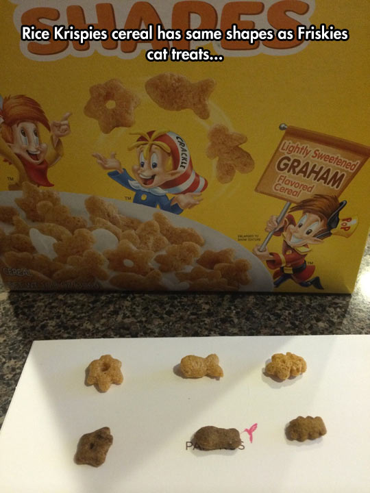 funny-Rice-Krispies-cereal-Friskies-cat-treats