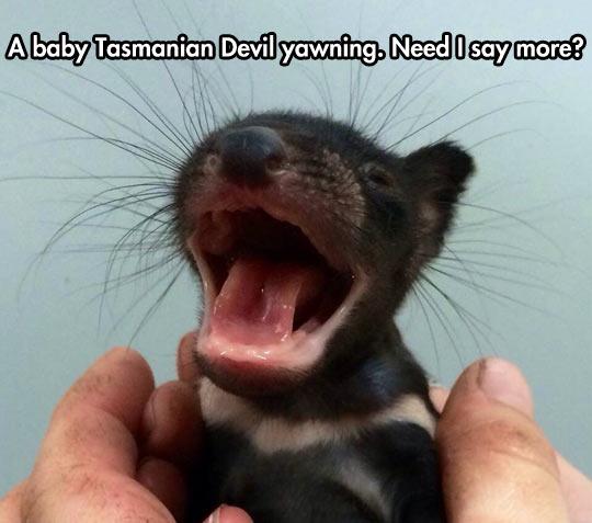 Image result for tasmanian devil funny
