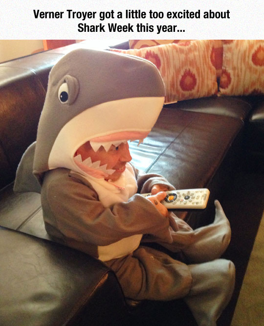 Embrace The Shark
