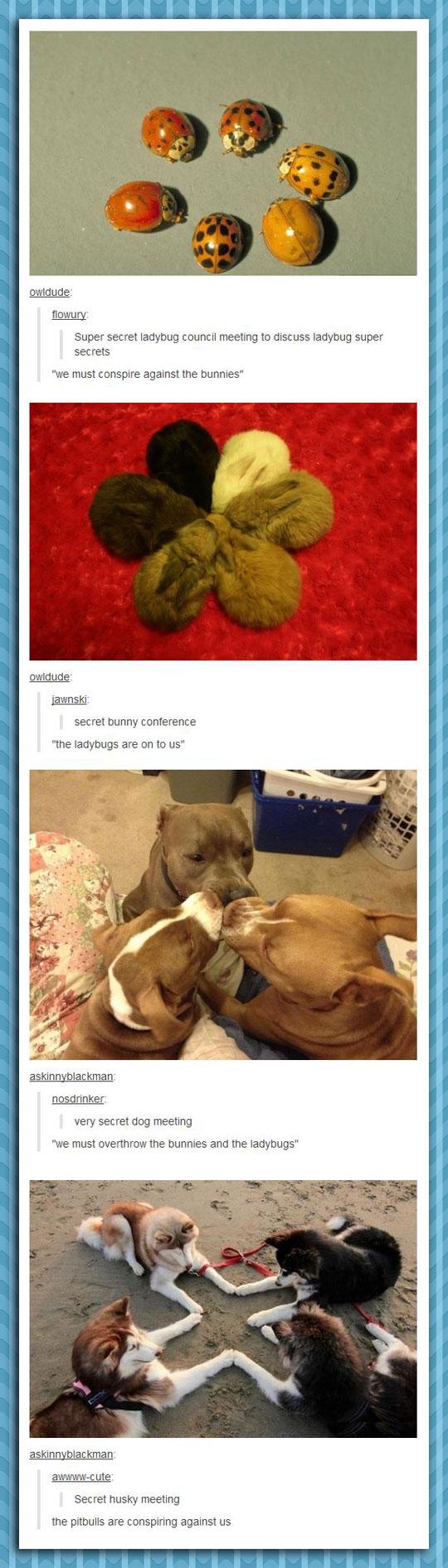 funny-animals-gathering-conspiring-bunnies