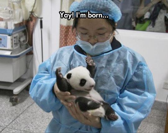 Baby Panda Is Happy