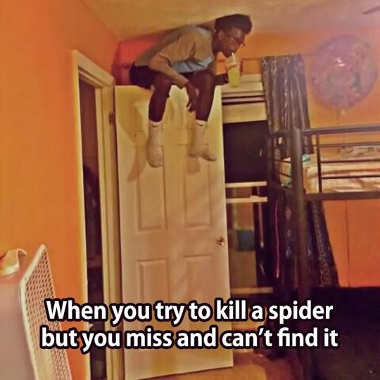 funny-bedroom-door-sitting-drinking-spider