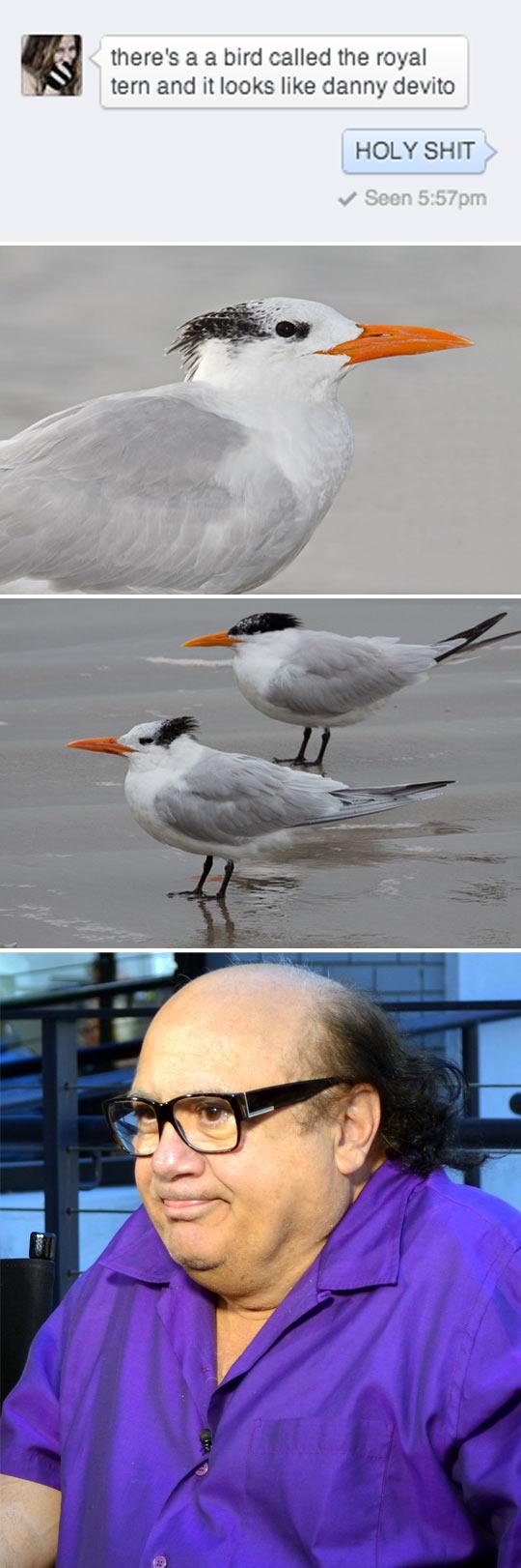 Danny Devito Bird