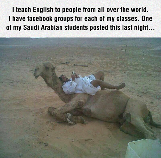 funny-camel-desert-student-picture-lay-down-over