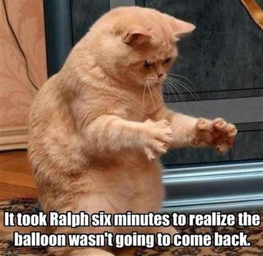 funny-cat-Ralph-paw-balloon