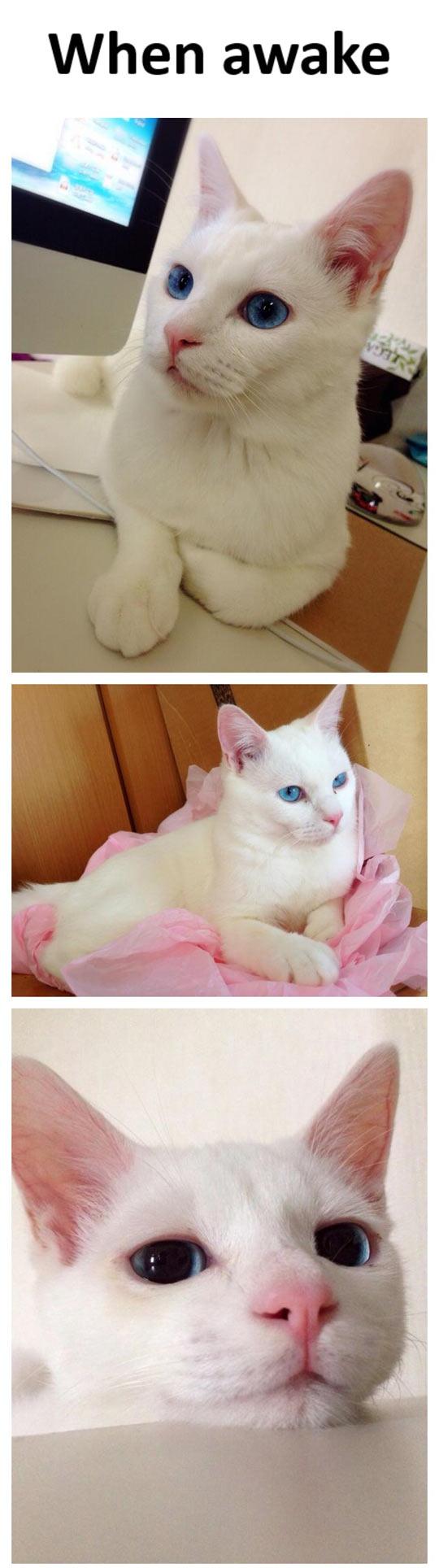 When A Gorgeous Cat Sleeps