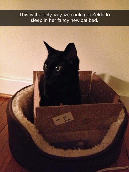 funny-cat-box-Zelda-bed